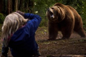 grizzly_pic