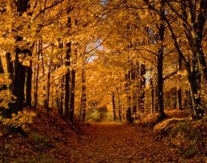 Down-the-Autumn-Path